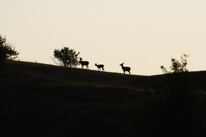 3 Cervi all'alba. Stefano Franceschetti