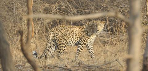 La Tigre e il Leone. Sulle tracce dei grandi predatori nel loro ambiente naturale. Presenta il biologo Davide Palumbo il 10 aprile 2013