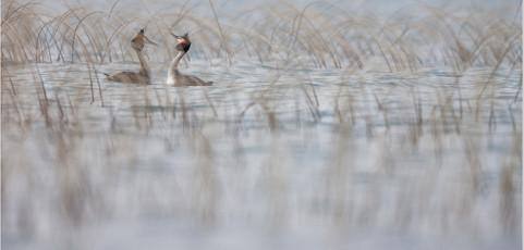 Mostra fotografica – Habitat: viaggio nella Natura