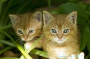 C'erano anche dei gattini che Carlotta è riuscita a scovare