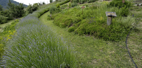 Visita al Giardino botanico Nova Arbora e sessioni fotografiche – Sasso Marconi 16 giugno 2013