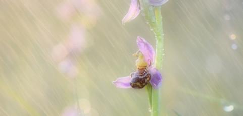 Resoconto lancia la sfida di maggio 2014 – Le orchidee
