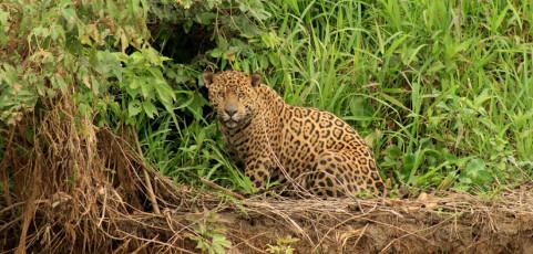 Amazzonia e Pantanal: il regno del giaguaro a cura di Davide Palumbo – 22 ottobre 2014