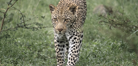 Wildlife is my life di Claudio Zamagni – Mercoledì 4 febbraio 2015 ore 21,00