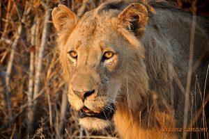 2011 Sud Africa