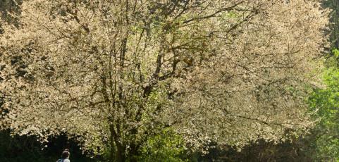 Parco dei Gessi bolognesi e Calanchi  dell'Abbadessa – escursione 17 aprile 2016