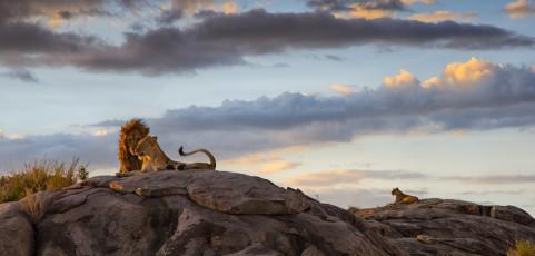 Animalia con Marco Mercuri – 10 maggio 2017
