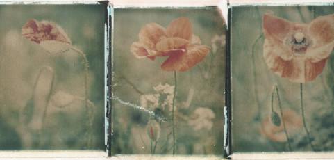Maria Vodarich e le sue Polaroid – 11 ottobre 2017