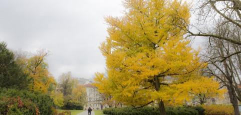 Resoconto lancia la sfida di novembre 2017- Foliage